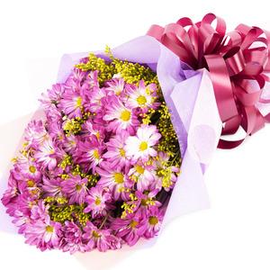 핑크소국과의 만남-계절상품
