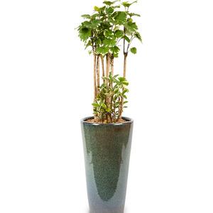 관엽식물 파비안느