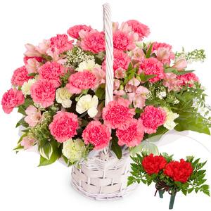 카네이션바구니(꽃행복338호)(코사지2개무료)