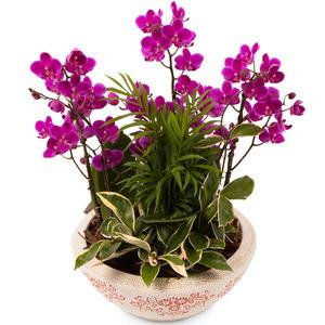 미니호접과 공기정화식물