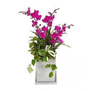 사무실선물로 인기 만천홍(핑크)