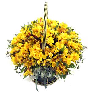 프리지아바구니(봄상품)